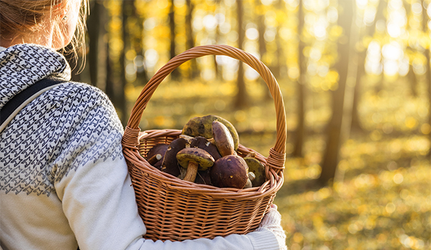Žena na hríboch v lese počas jesennej prechádzky