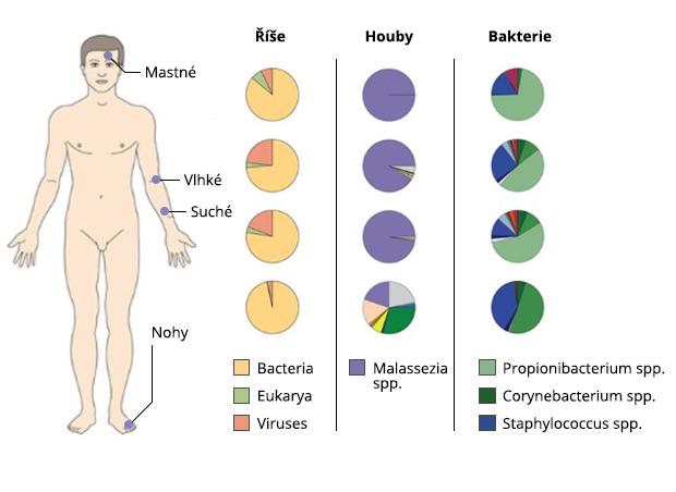 mikrobióm kůže